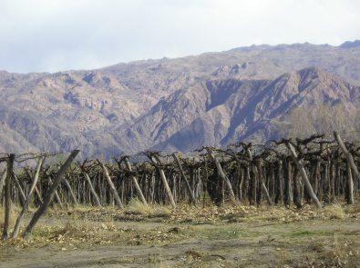 Argentina, vitigni